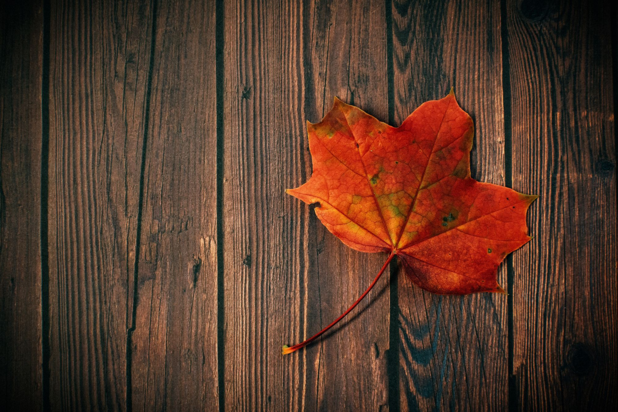 autumn-leaf-board-colors-dark-602579-1584874143.jpg